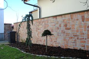 zeď korál kámen